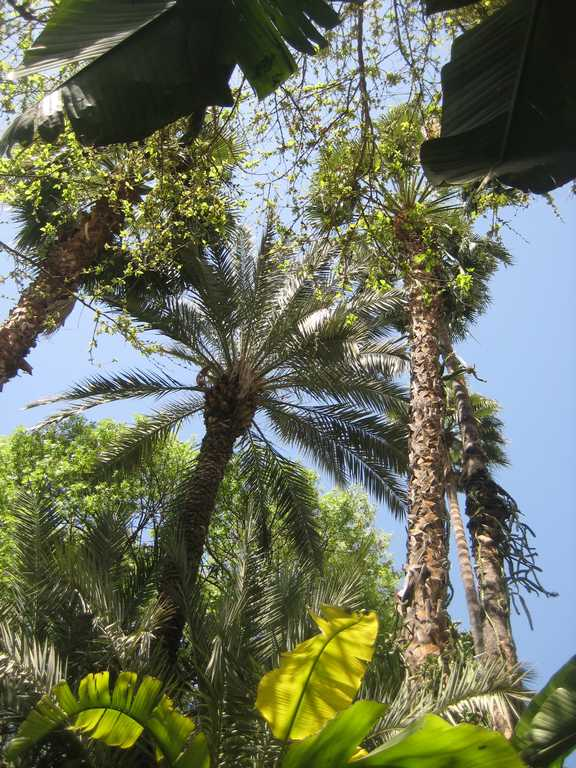 palms offer welcome shade in the Jardin Majorelle